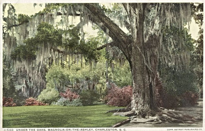Horticultural History, Charleston, SC, Oak Tree, Magnolia