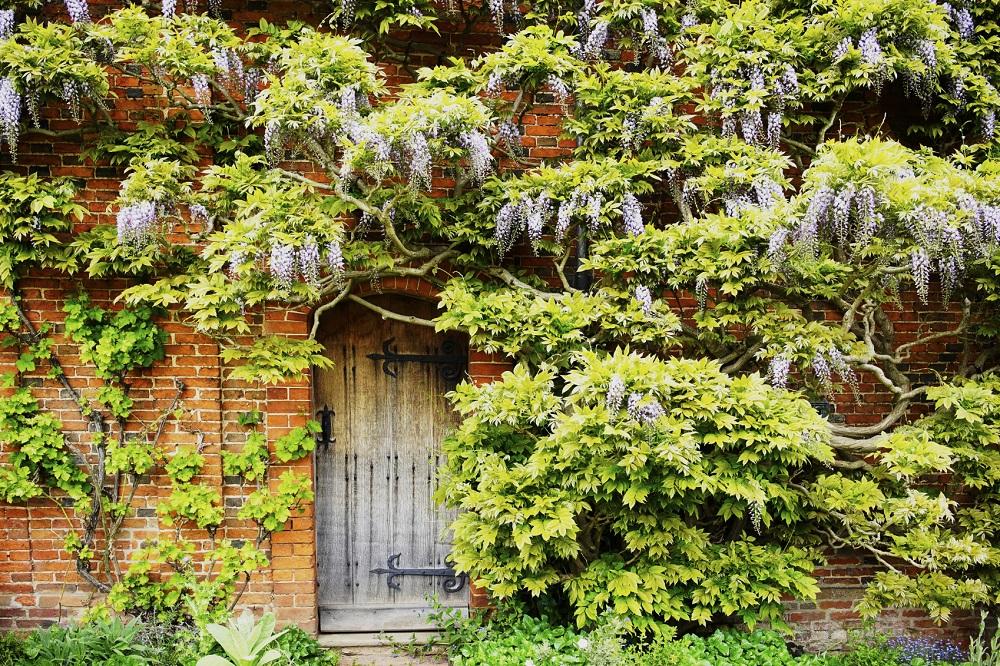 alleys, Charleston, history, wisteria, gate